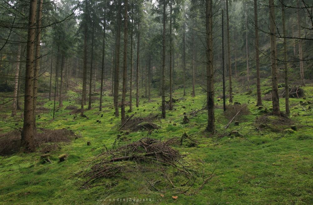 Les v Českém Švýcarsku