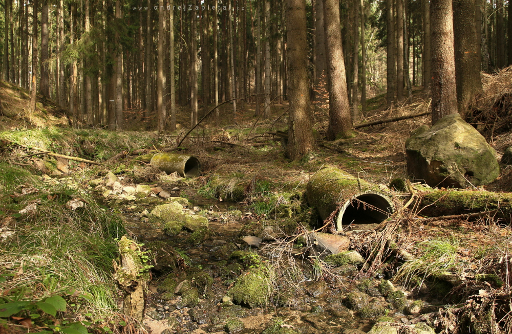 Fotografie What Is Left of the Pipes, na fotce: forest, trees, water, moss, nature, autor: Ondřej Zapletal