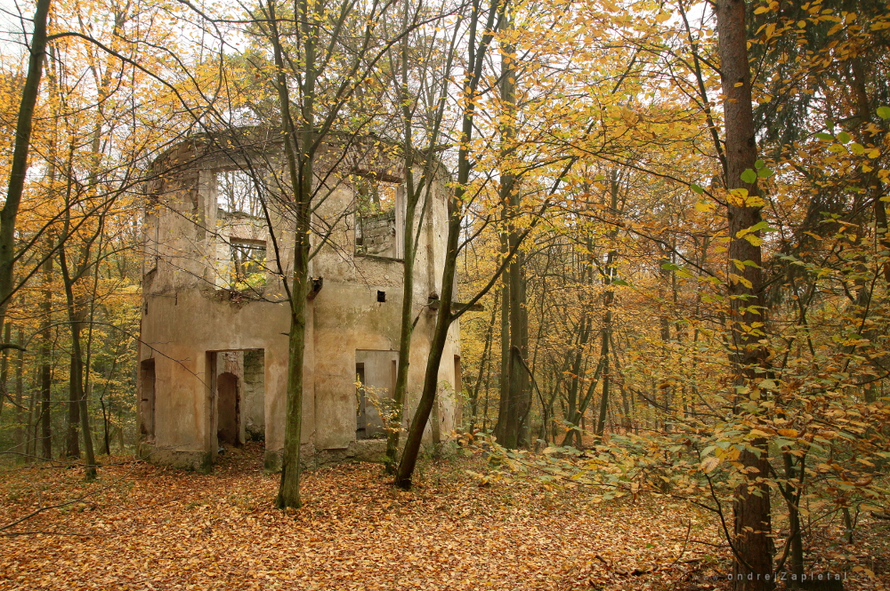 Fotografie In an Orange World, na fotce: trees, autumn, ruins, forest, autor: Ondřej Zapletal