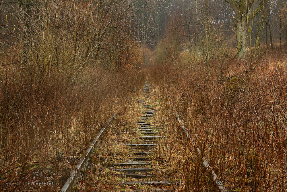 Fotografie Tracks to Nowhere, na fotce: train, industrial, trees, autor: Ondřej Zapletal